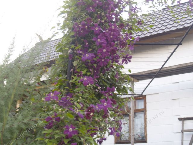 Работа по удобрению оформление двора